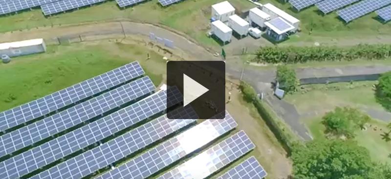 Martinique : du solaire et des moutons !