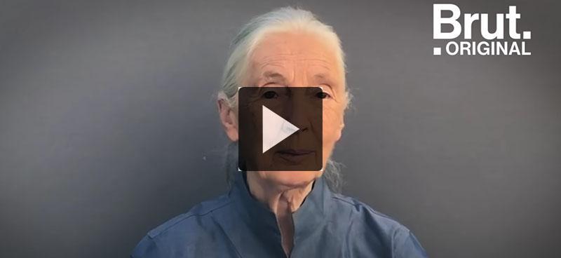 Le message d'espoir de Jane Goodall