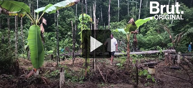 L'agroforesterie en Amazonie guyanaise