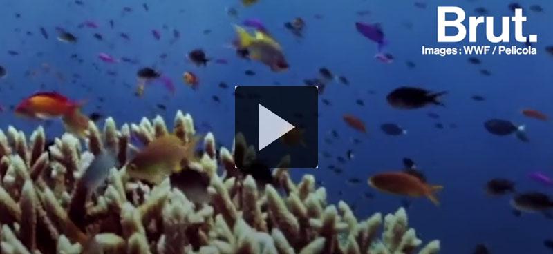 Récif de Tubbataha: un succès de protection environnementale