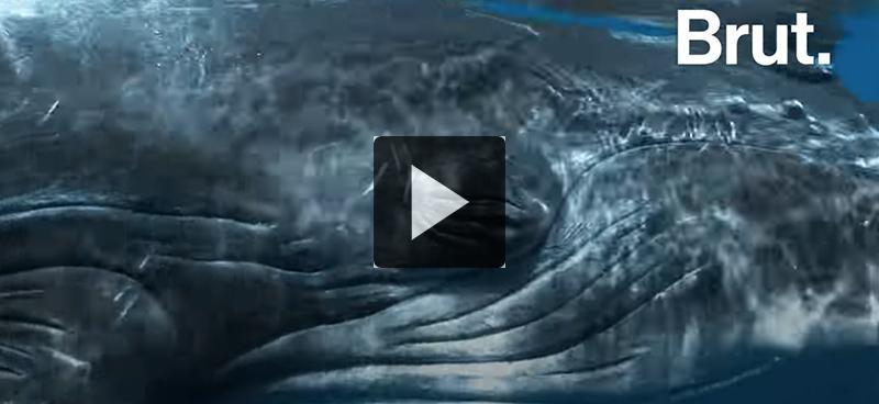 Les baleines, une arme contre le réchauffement climatique?