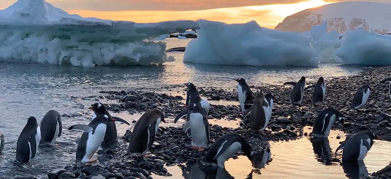 Groupe de pingouins en Antarctique. Michel André, Author provided